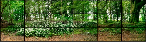"""MAY 11TH 2011 WOLDGATE WOODS 1:45PM"" 18 DIGITAL VIDEOS SYNCHRONIZED AND PRESENTED ON 18 55"" NEC SCREENS TO COMPRISE A SINGLE ART WORK, 27 X 47 1/8"" EACH 81 X 287"" OVERALL DURATION: 2:00 © DAVID HOCKNEY"